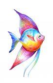 Barva krásná ryba vektorové ilustrace. Ruční kreslení ryby