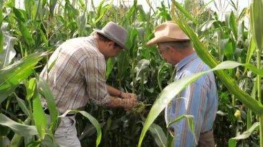 Dva farmáři v kukuřičném poli, zkuste kuří oka pro chuť a splatnost
