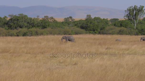 Skupinu slonů je na poli s sušené do trávy z africké savany