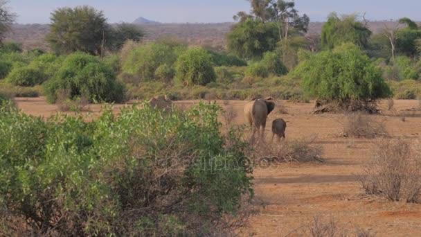 Sloní rodina jde na horké hnědá zem rezervy africké savany