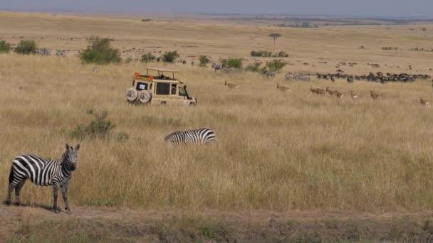 Rezervace Masai Mara, Keňa Červenec 18,2017: Safari Jeep na savanu s stádo zvířat