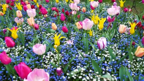 Flowerbed Of Colorful Flowers From Spring Tulips