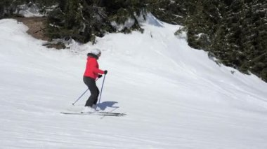 Woman Skier Go Down On Ski Slope Among Pine Forest