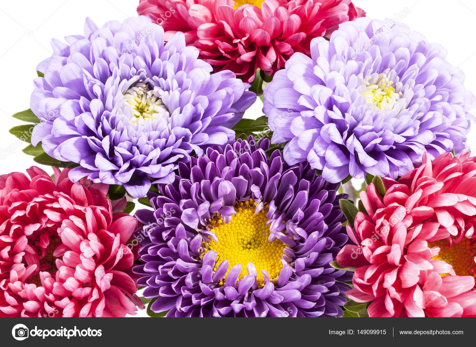 Bouquet Of Beautiful Colorful Aster Flowers Stock Photo