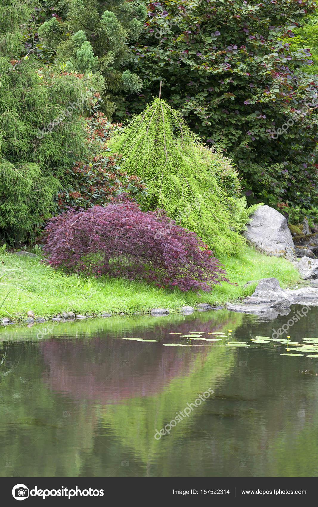 Japanischer Garten, exotischen Pflanzen, Wroclaw, Polen — Stockfoto ...
