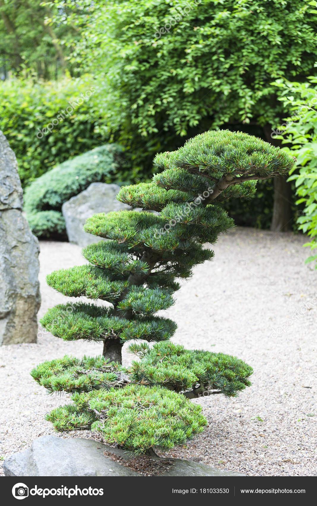 Japanischer Garten im Sommer, exotische Pflanzen, Wroclaw, Polen ...