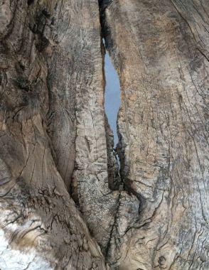 Closeup piece of wood