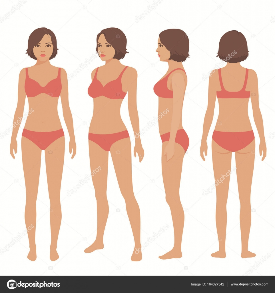 Anatomía del cuerpo humano, vista posterior, frontal, — Vector de ...