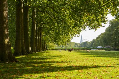 Hyde park in the autumn, London
