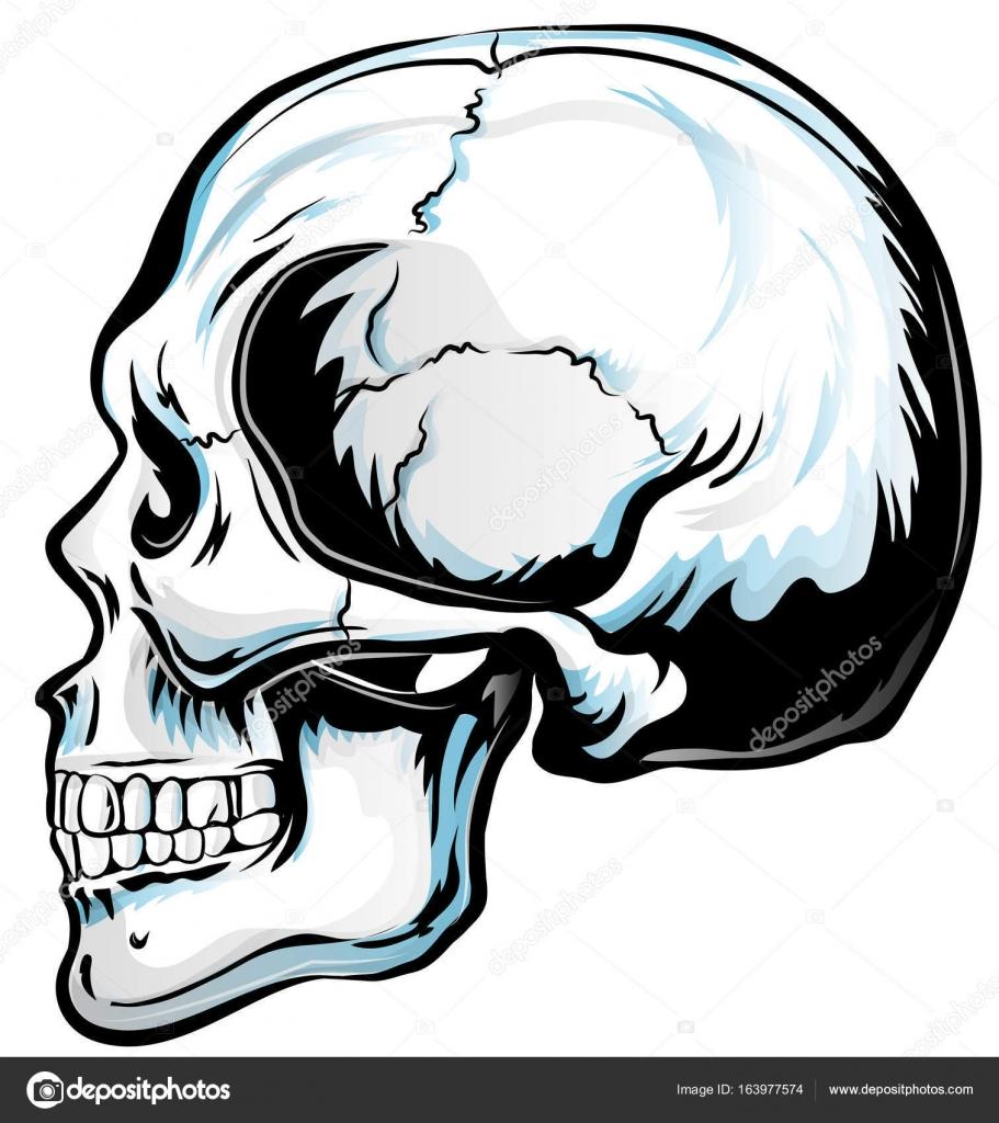 Anatómica del cráneo Vector Art. Ilustración de dibujado a mano ...