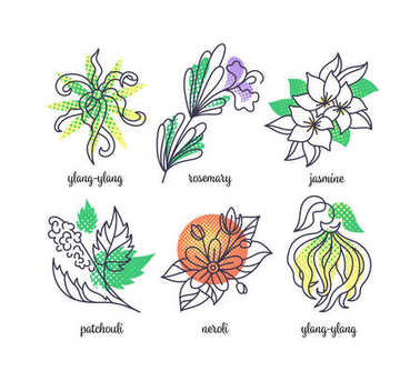 Perfume herbs illustrations, line and color icons' set.