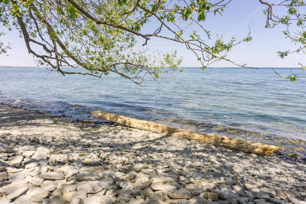 shore of Lake Ontario with a tree log