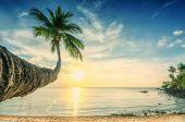 Světlé západ slunce na písčitou tropickou palm beach