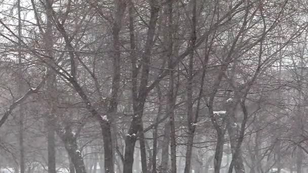 Snowfall in the background of trees in Vladivostok in slow motion
