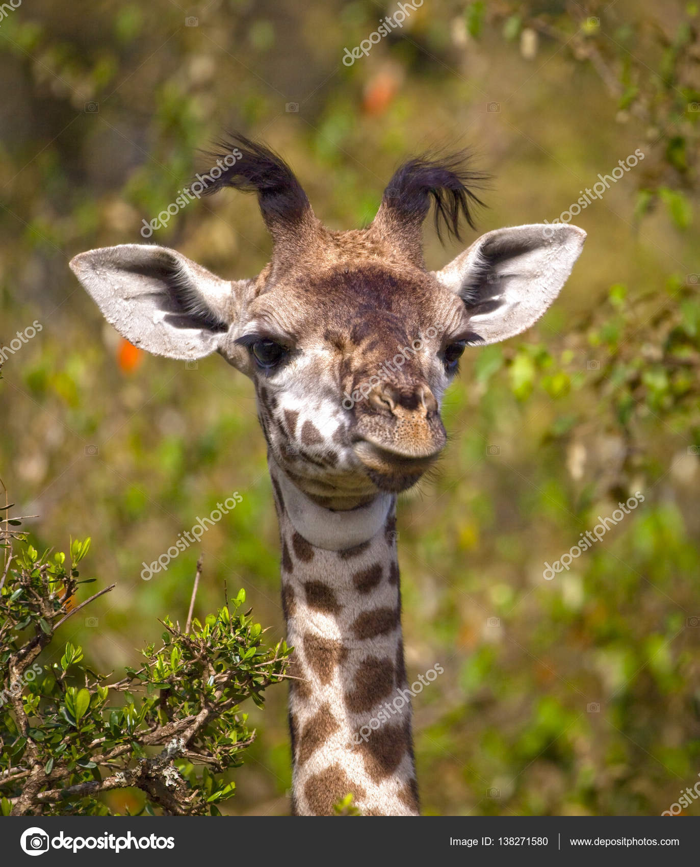 funny baby giraffe pictures