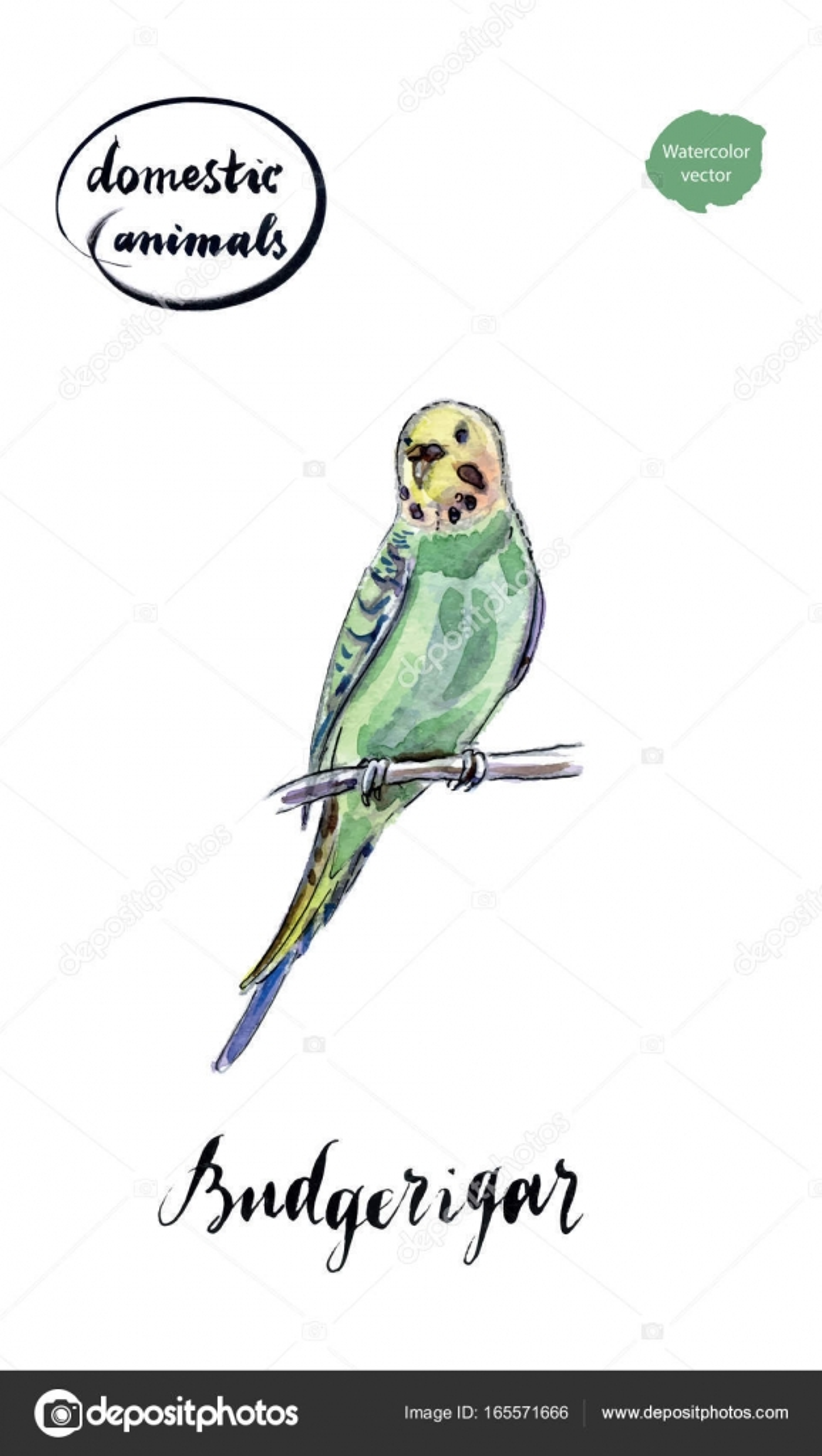 Sulu Boya Yeşil Ve Sarı Muhabbet Kuşu Stok Vektör Mimino 165571666