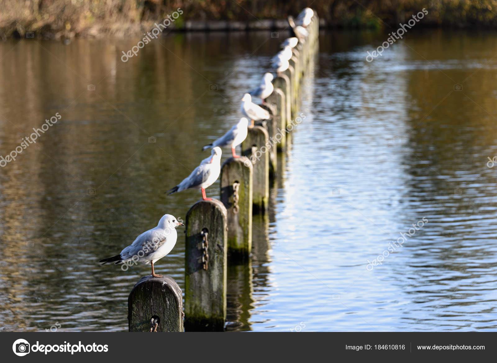 Ptaki Zajmujące Wiersz Polaków W Znajduje Się W Parku