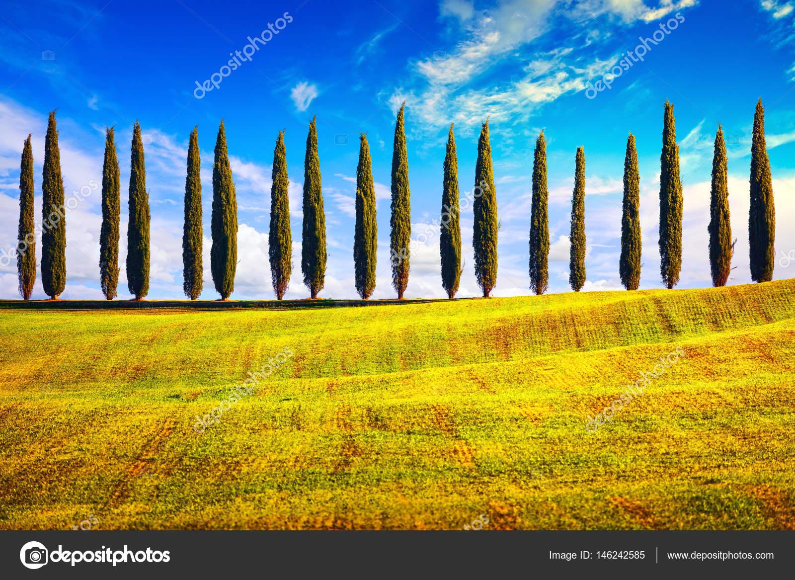 toscana cipreses de la fila campo paisaje italia europa. Black Bedroom Furniture Sets. Home Design Ideas
