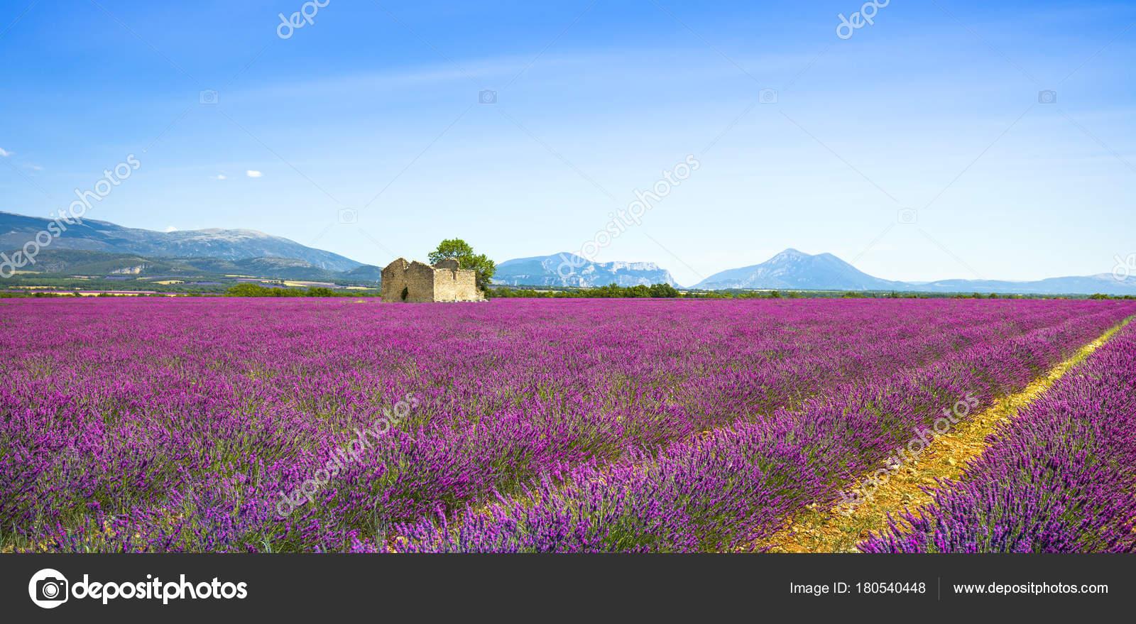 Лавандовые цветы, цветущие поля, старый дом и дерево ...