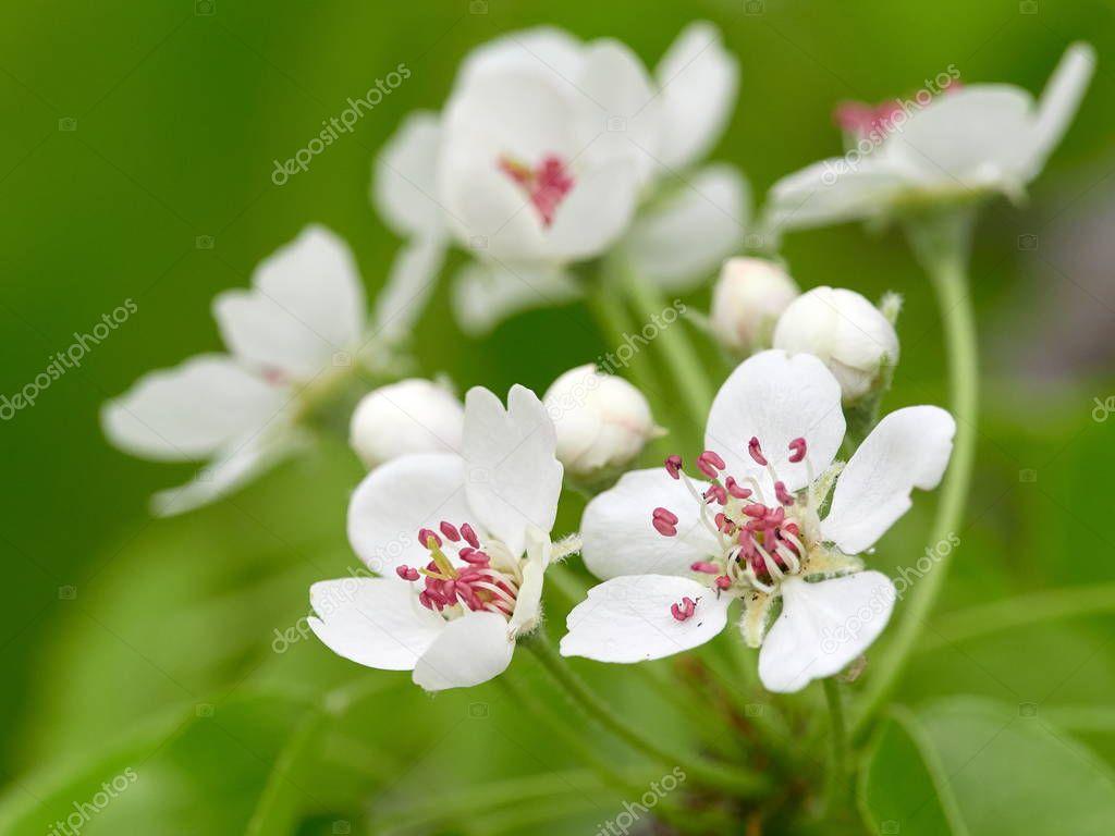blooming flowers on wild meadow in spring