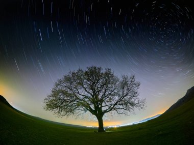 sky at night with startrails and silhouette of tree