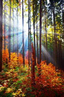 Warm autumn scenery in the forest