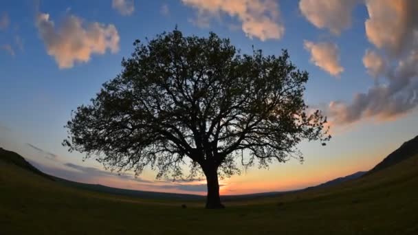 lonely tree on field at dawn timelapse footage, Dobrogea, Romani