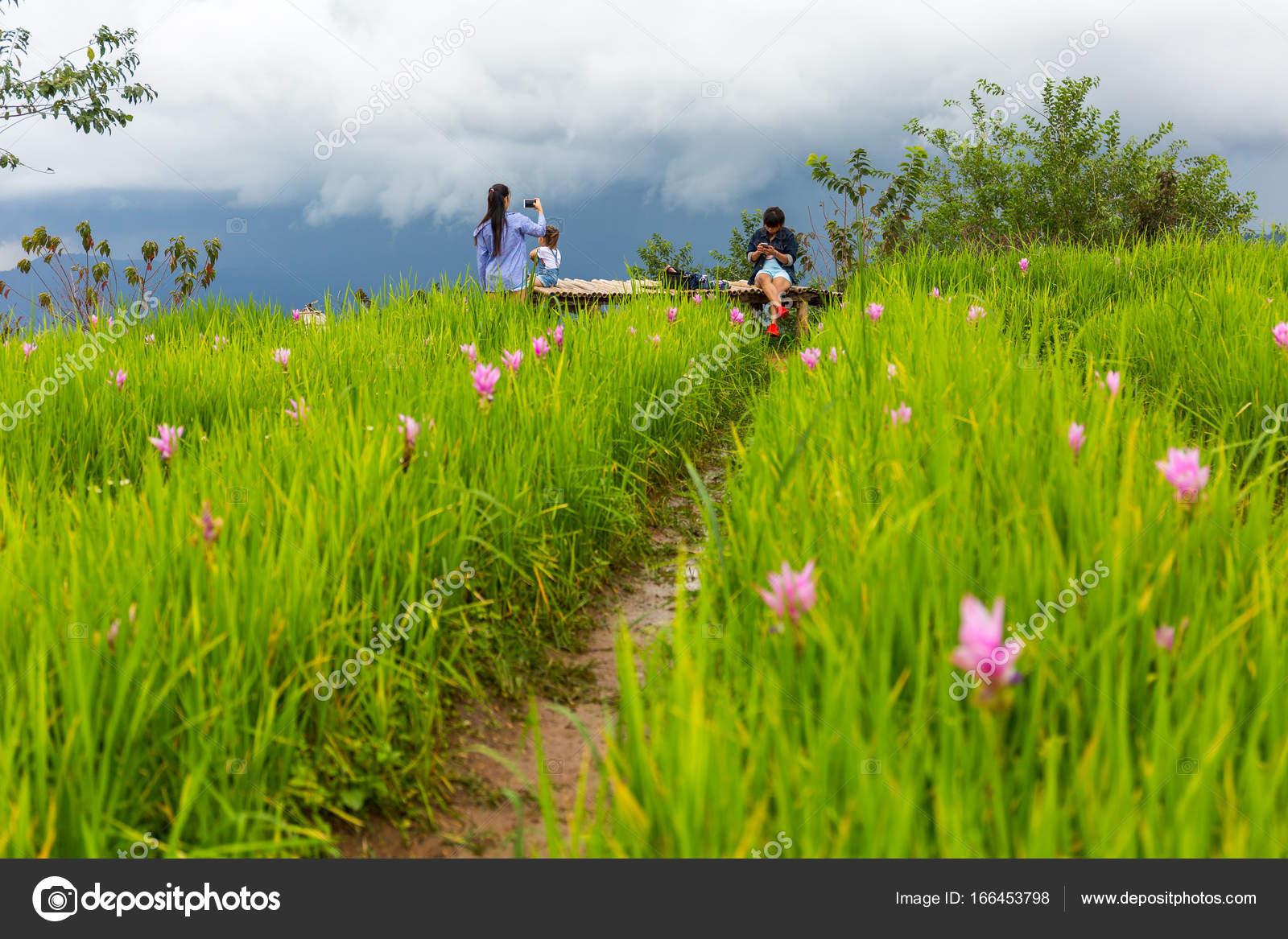 Touristes dans le jardin de fleurs de montagne Chaem LUN à Chiang ...