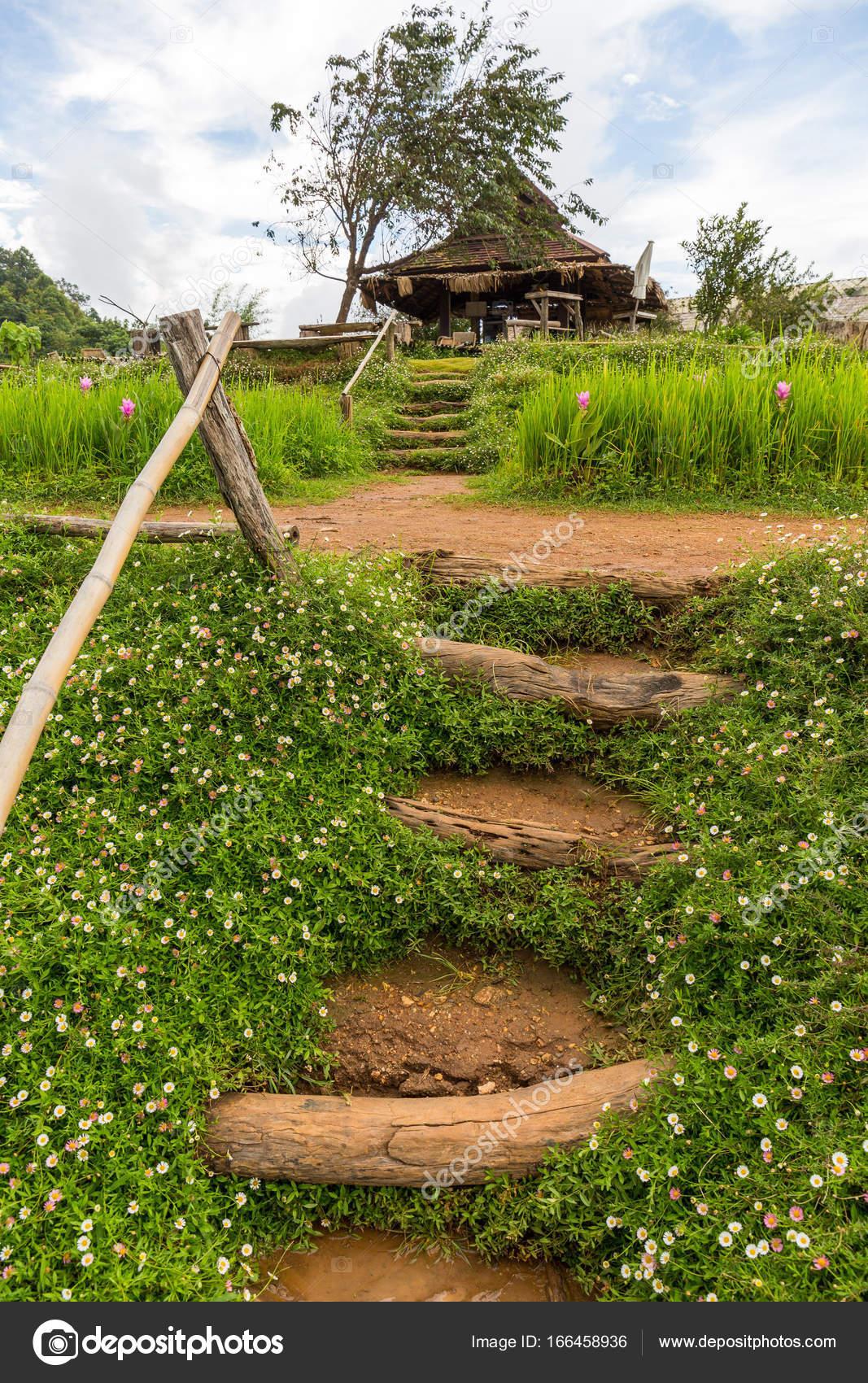 Le jardin de fleurs de montagne Chaem LUN à Chiang Mai, Thaïlande ...