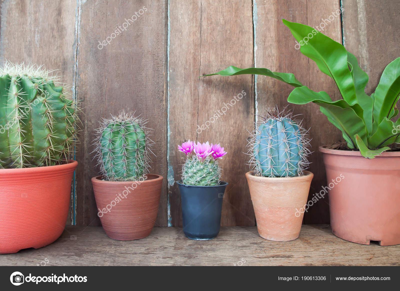 Rangée de plantes cactus sur table en bois, jardin de la ...