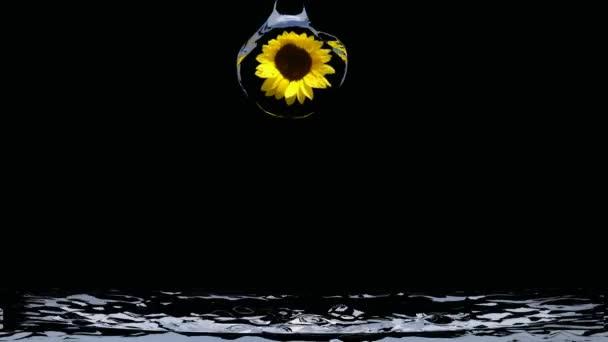 Moře od slunečnice