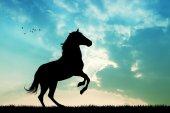krásné koně při západu slunce