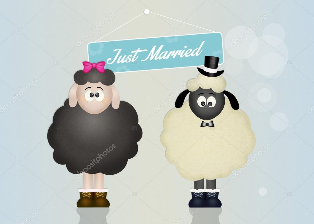 Wedding of sheeps