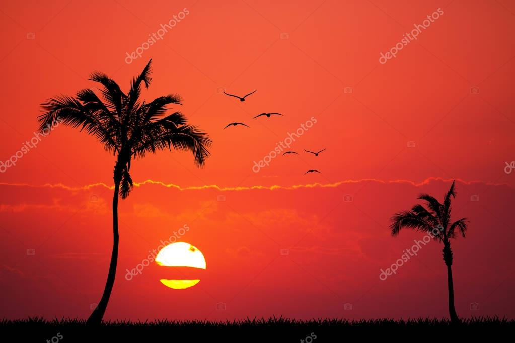 palms on exotic island at sunset