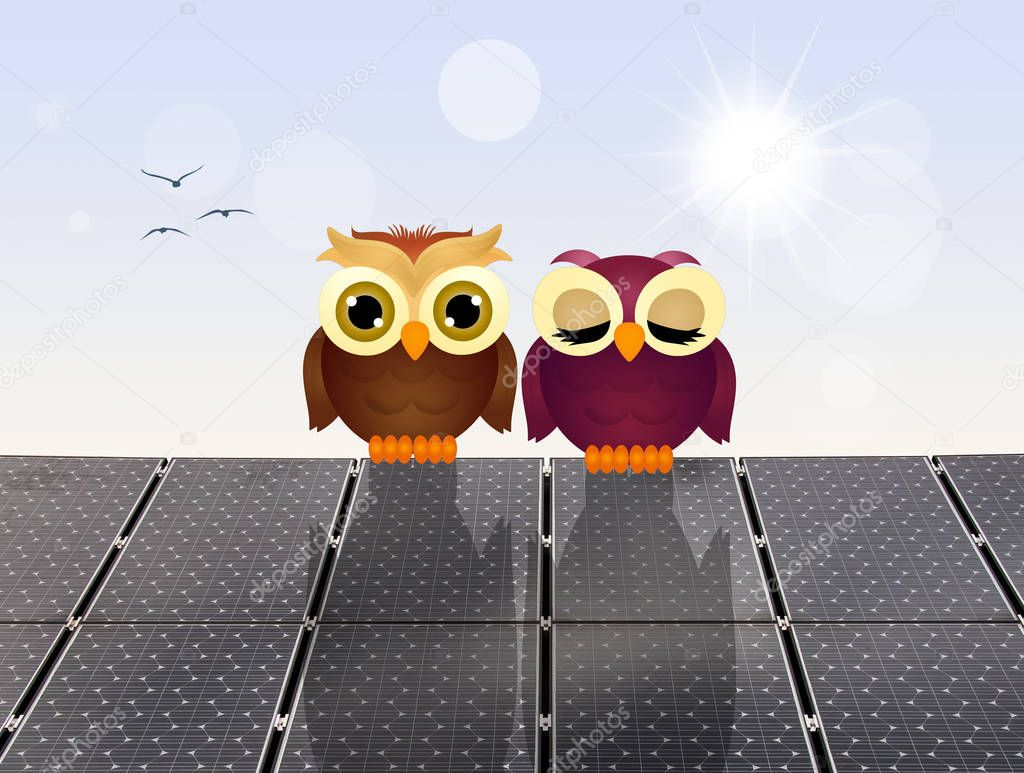 owls on solar panels