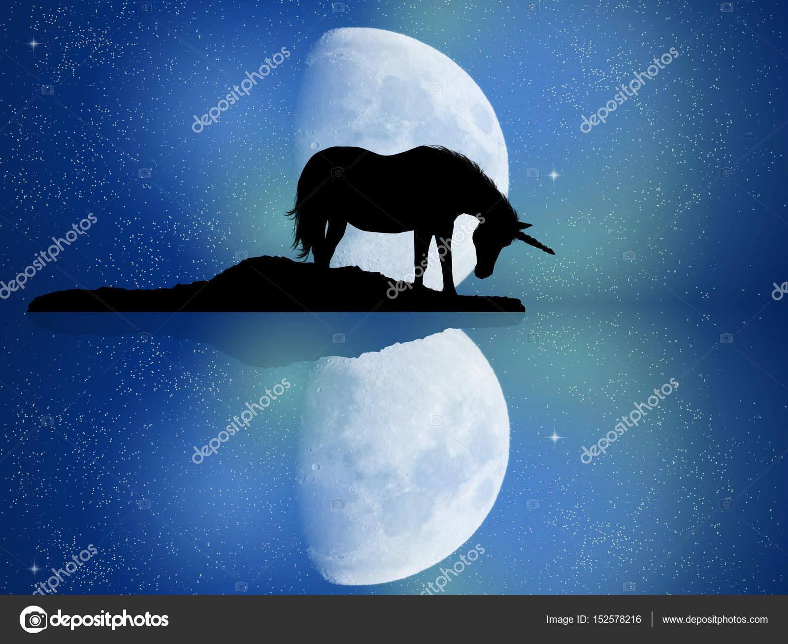 Reflexión De Unicornio En El Agua Fotos De Stock Adrenalina