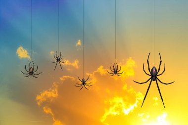 spiders at sunset