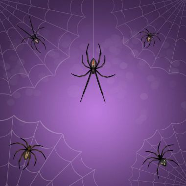 spiders and black widow
