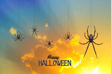 Halloween spiders at sunset