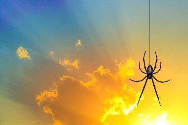 spider silhouette at sunset
