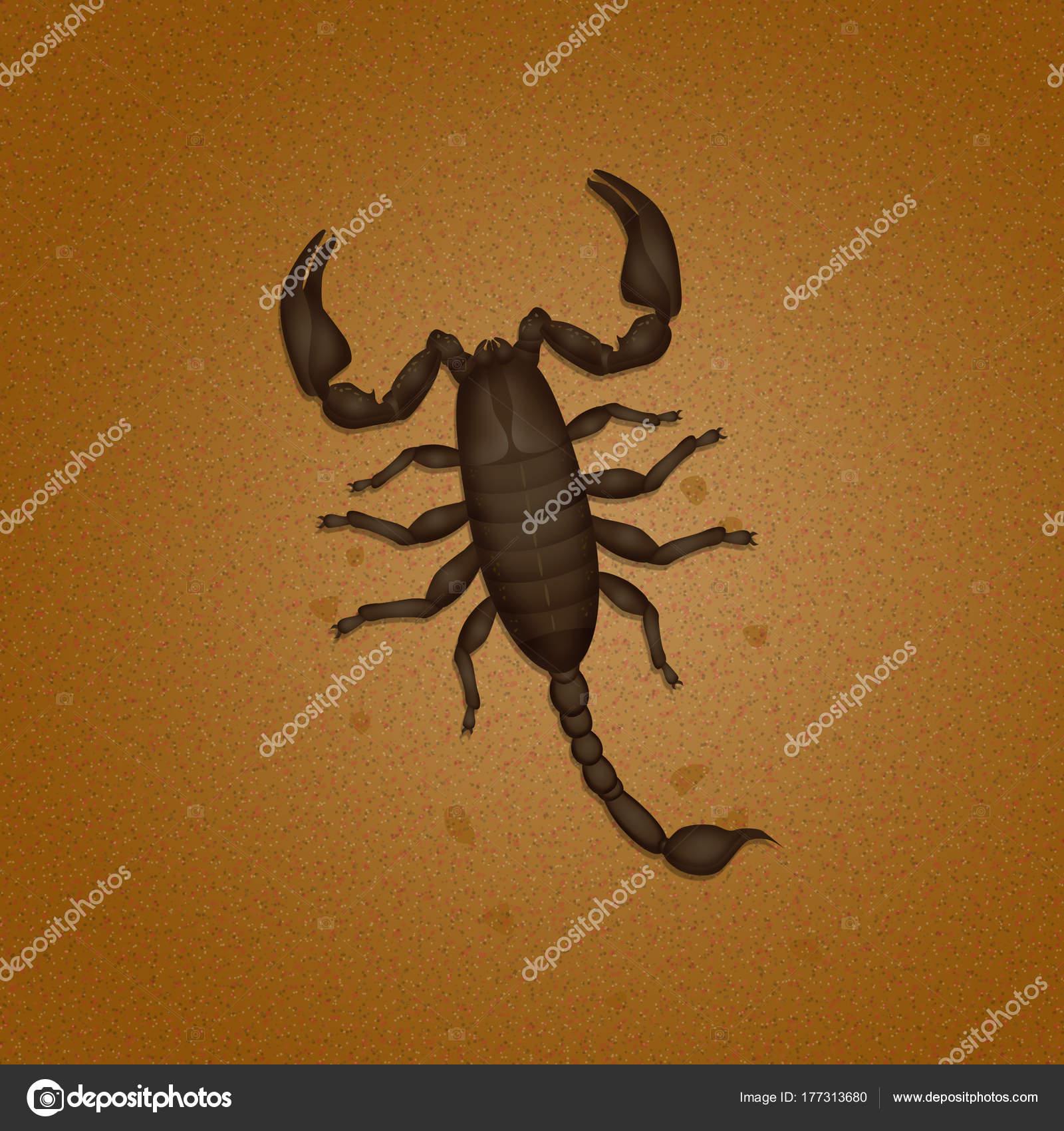 Scorpion In The Desert
