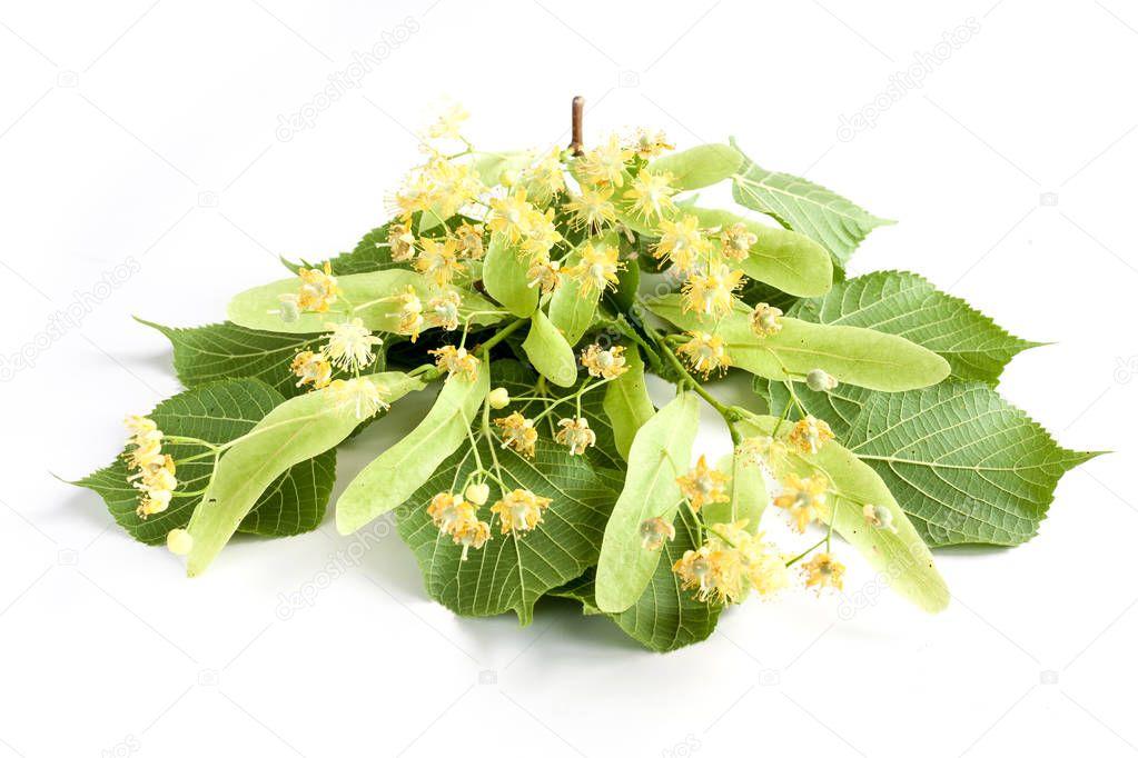 Lime flower on white