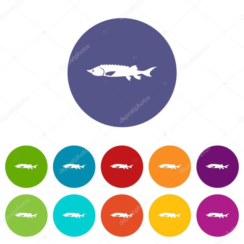 Fresh sturgeon fish set icons