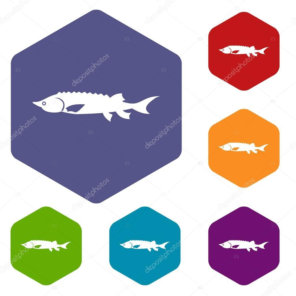 Fresh sturgeon fish icons set