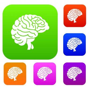 Brain set collection