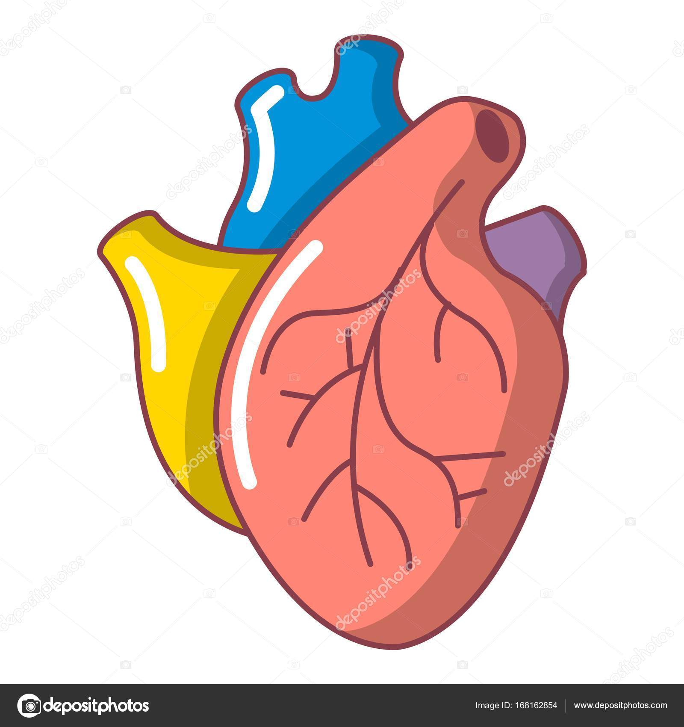 Dibujos Corazon Humano Icono Del órgano Del Corazón Humano