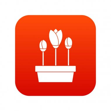 Tulips in box icon digital red
