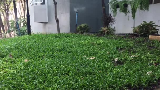 Zelené trávy a zalévání zavlažování v zahradě