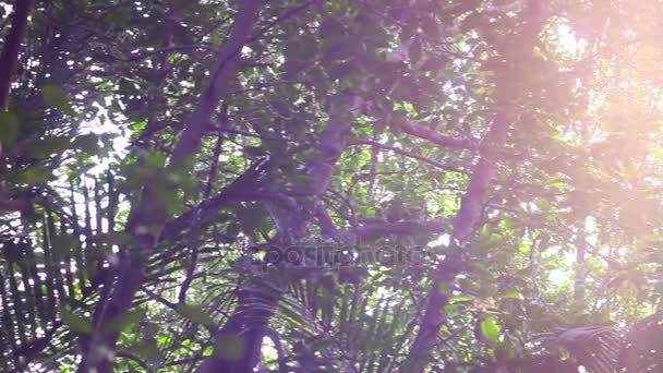 Beautiful out of focus High angle View of the Sun breaking through trees environment in Thailand.