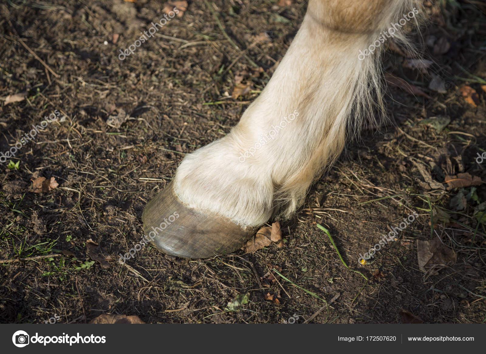 Pezuña de caballo cerca — Foto de stock © KrasiKanchev #172507620